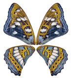 blue and yellow four butterfly wings on white