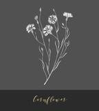 Vector cornflower plant.