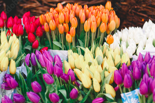 Beautiful colorful spring tulips in a flower shop. Vibrant floral background.