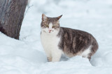 Portrait of a gray cat in the snow