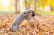 Leinwanddruck Bild - Playful kitten hugs puppy on fallen autumn leaves and looking away