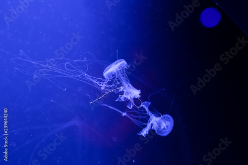 mata magnetyczna Background a lot of jellyfish, underwater world