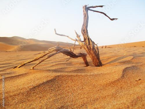 Desert Golden Sand Landscape