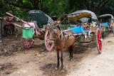 Caballo con carroza, Myanmar