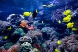 Aquarium. Underwater life landscape