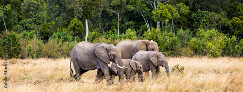 African Elephant Family Web Banner