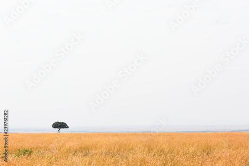 Open Kenya Africa Grasslands Field One Tree