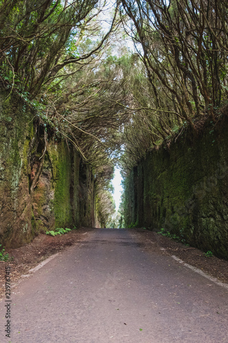 street through forest landscape - road through forest -