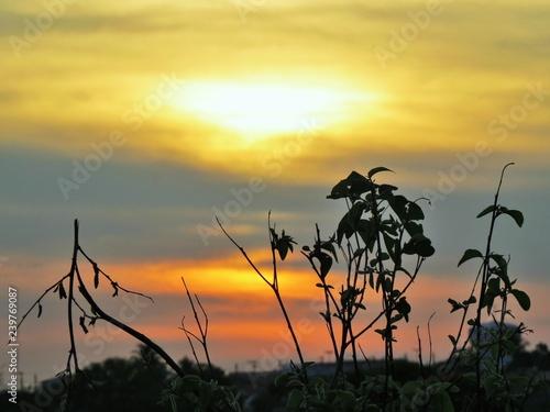 obraz lub plakat Sunset