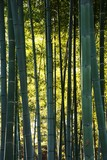 Bamboo grove © tamu