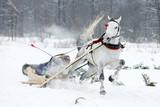 Fototapeta Horses - WYŚCIG KUMOTEREK © Łukasz Gagulski