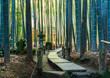 Leinwanddruck Bild - 鎌倉 報国寺 竹の庭