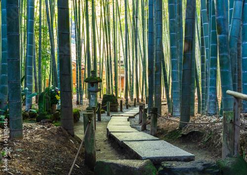 Leinwanddruck Bild 鎌倉 報国寺 竹の庭