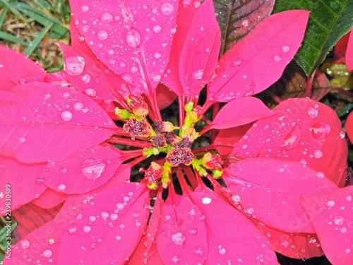 Red Flower - 239830699