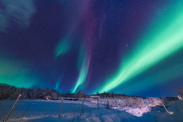 The polar arctic Northern lights aurora borealis sky star in Scandinavia Norway Tromso in the farm winter forest  snow mountains