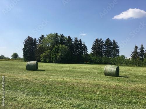 Heuballen auf einer frisch gemähten Wiese in Esslingen (Baden-Württemberg)