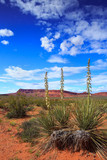 Springtime yucca flowers in the desert landscape of Warner Valley, in southern Utah - 239895013