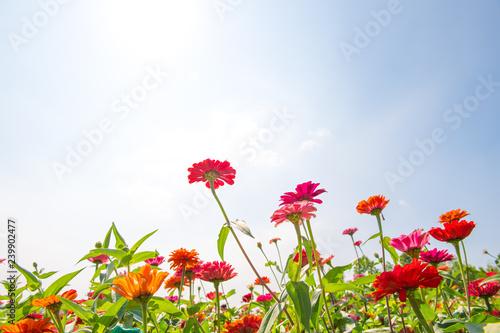 Foto Murales 가을 꽃 가을 풍경 야생화 배경 백그라운드 이미지