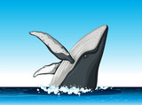 Humpback whale jump out of water