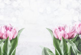 Pink tulips at white background with bokeh, front view,frame. Spring flowers. Tulips bunch © VICUSCHKA