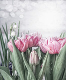 Spring flowers background with tulips and snowdrops at white wooden wall background with bokeh. Springtime nature concept