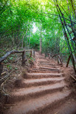 staircase on ground with pathway in the bamboo forest © Engdao