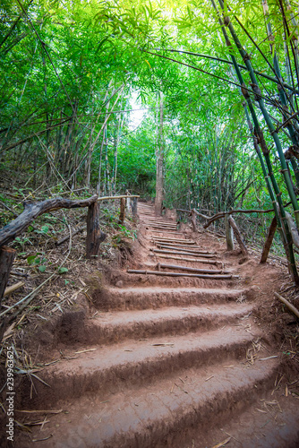 staircase on ground with pathway in the bamboo forest