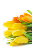 Yellow Tulips for Valentine's or Mother's Day. Isolated. © Татьяна Атаманюк