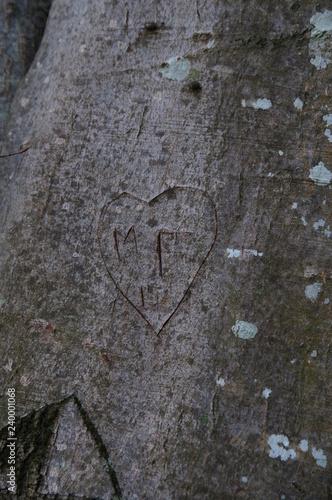 coeur gravé dans les arbres en preuve d'amour - 240001068