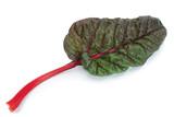 Chard leaf closeup - 240022419