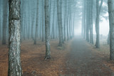 forest in fog. misty dark forest