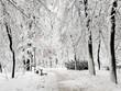 Leinwandbild Motiv Winter city park