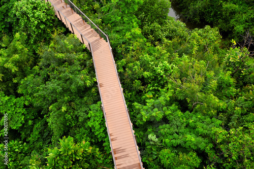 Walking paths in the wild in the tropics.