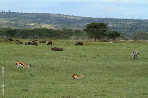 Der Lake Nakuru Nationalpark in Kenia