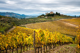 Chianti Region, Tuscany. Vineyards in autumn. Italy © ronnybas