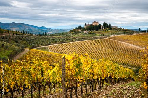 Chianti Region, Tuscany. Vineyards in autumn. Italy