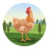 Chicken over landscape
