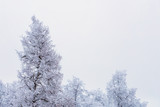 Top of frozen winter forest landscape at cloudy weather with soft light