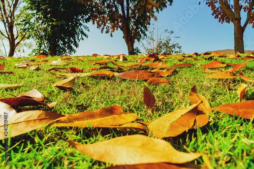 Autumn leaves on the forest floor, Golden autumn. yellow leaves. autumn alley.