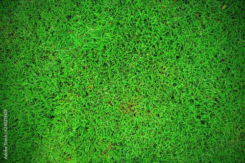 Green grass texture background, Green lawn, Backyard for background, Grass texture.