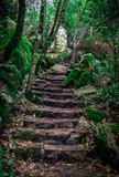 Treppen durch den Wald