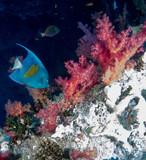 fondo marino con muchos peces