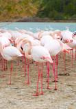 pink flamingos next to a lake