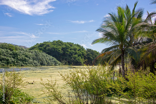 Tropical river with palm