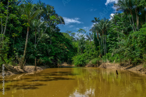 Amazon jungle and river