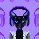 Contemporary art collage. Music concept. Hipster Cat DJ. Purple vibes - 240280678