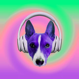 Contemporary art collage. Music concept. Dog dj. Colorful party vibes - 240280695