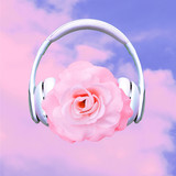 Contemporary art collage. Music concept.  Rose in headphones. Romantic mood - 240280818