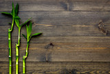 Bamboo shoot. Bamboo stem and leaves on dark wooden background top view space for text