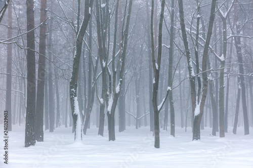 foggy winter park scene with naked trees standing in snow